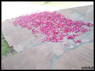 2008_honolulu_00053.jpg