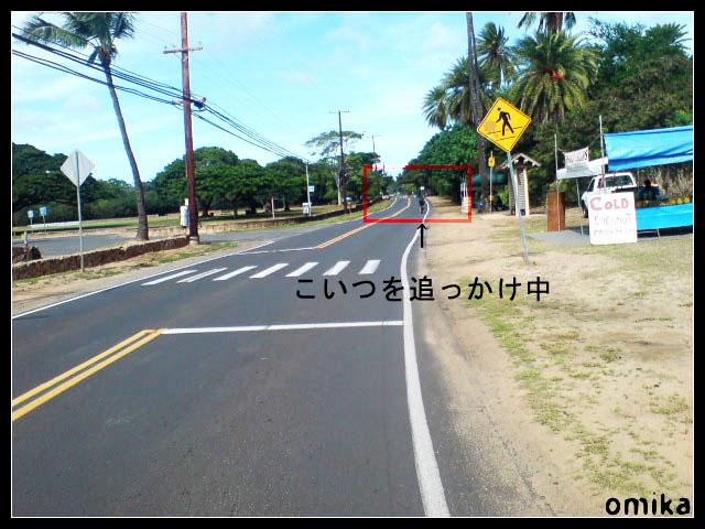 2008_honolulu_00104.jpg